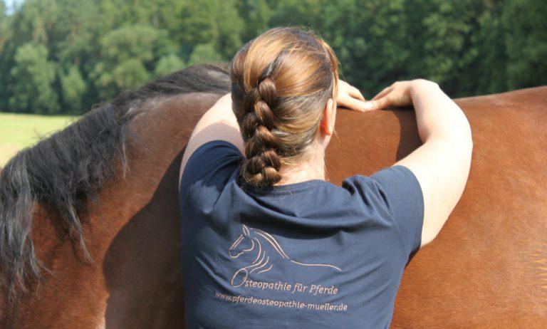 Osteopathische Behandlung am Rücken